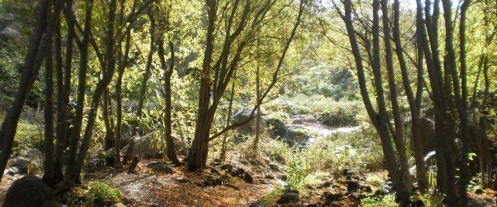 Pěší túra Barranco de los Cernícalos