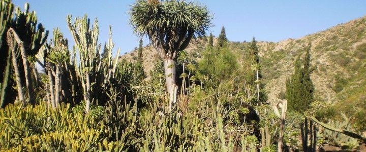 Botanical Garden of Gran Canaria