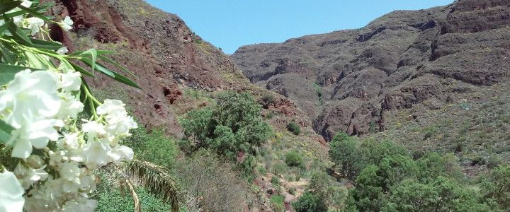 Guayadeque Ravine – The Troglodyte Heritage