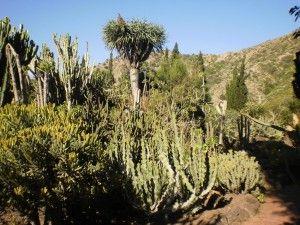 Jardín Canario